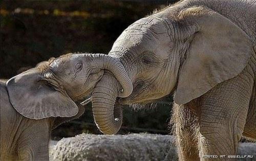nose hug