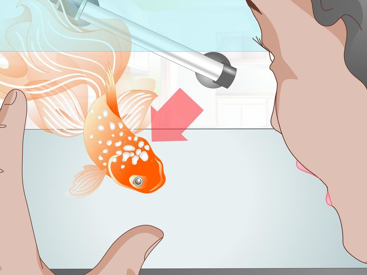 Fantail goldfish are among the easiest goldfish for beginners. If you're interested in owning a goldfish for the first time, fantails do not require extensive care. Provide your fantail with a large tank with a proper filtration system....