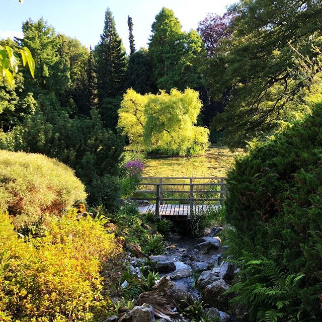 Gartenteich Im Sommer Botanischergartenmunster Schlossmunster Munster Garten Pflanzen Gartentechnik Backyard Design Outdoor Instagram