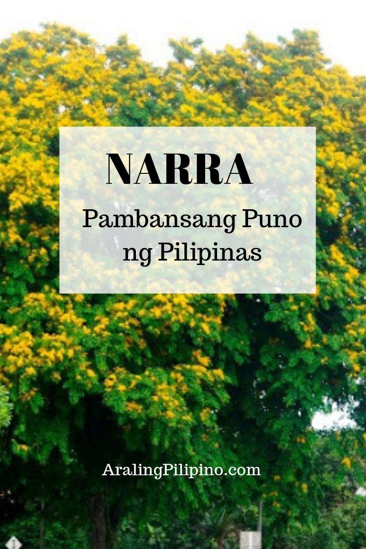 Narra Philippine National Tree Tagalog, Filipino, Pinoy