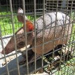 Armadillos are nocturnal and generally insectivores, worms, ants and the like but will also supplement their diet with tabors'. We use humane trapping devices and environmentally safe products when working around your home or business. More details: http://www.critterandpestdefense.com/services/armadillo-trapping/