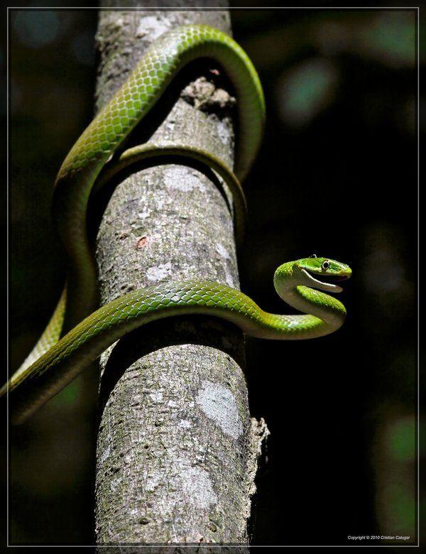 17 Best Images About Snake Board On Pinterest Pet Snake