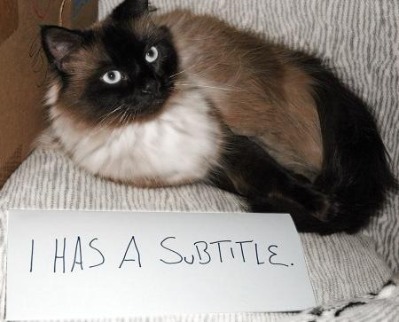 subtitle cat Cats Pinterest Cat