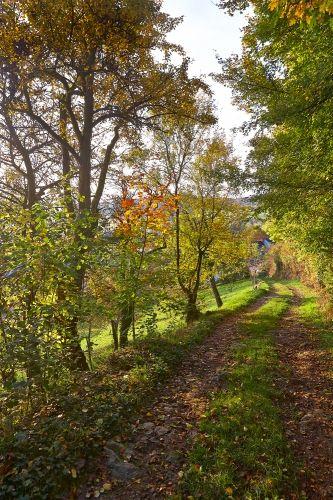 Country road in Rheinland-Pfalz, Germany