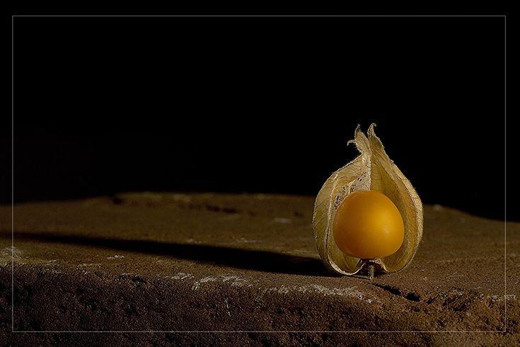 Фото жизнь (light) - RAMZES - Натюрморты - физалис