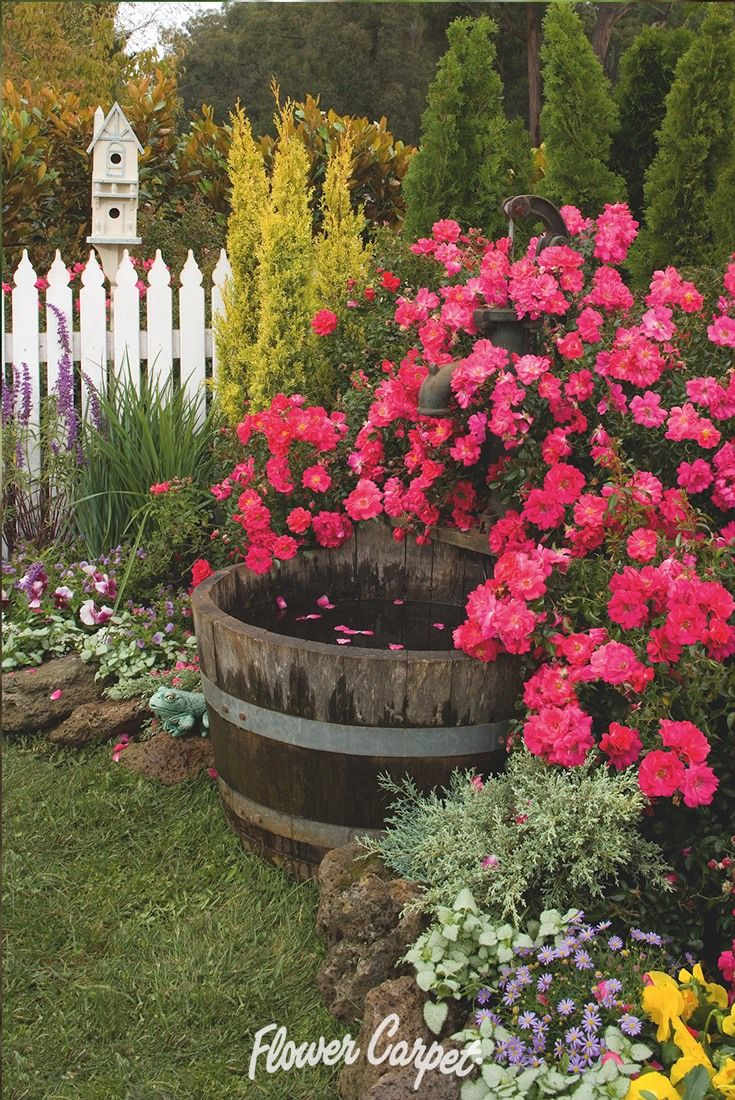 65 best garden designs with roses images on pinterest carpets flower carpet pink supreme is one of the 3 next generation varieties of flower carpet roses with breeding that makes it even more heat and humidity dhlflorist Image collections