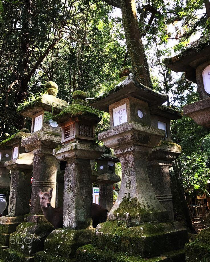 Deer - At Kasuga-Taisha                                                                                                                                                                                 More