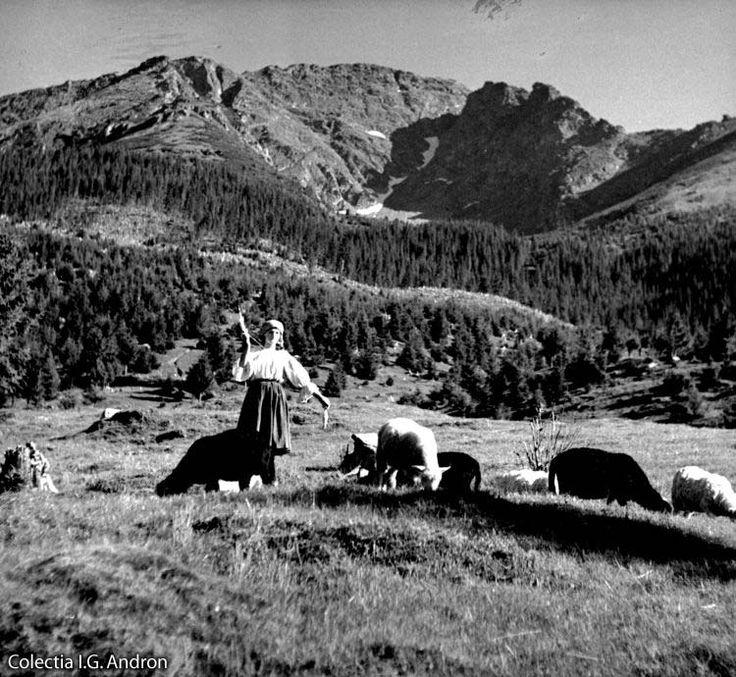 Ciobăncuţă la poalele Pietrosului Borşa, Maramureş - 16 aug. 1941