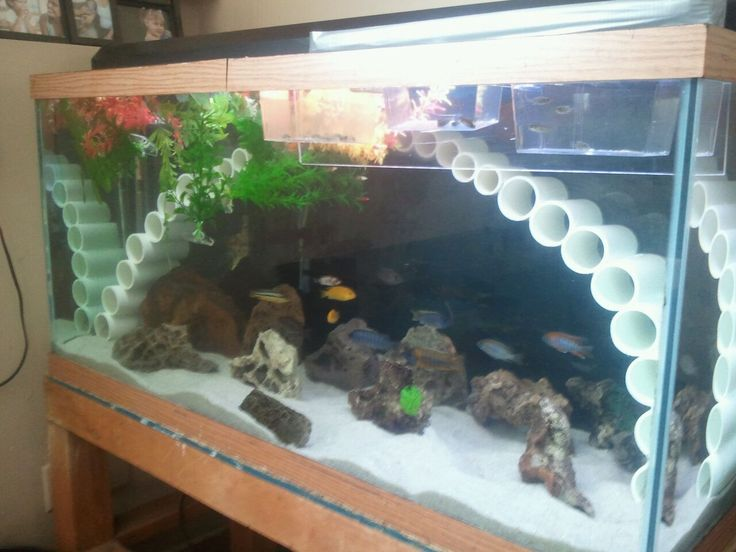 Awesome cichlid tank decorations 2 decorations for fish for Cichlid fish tank