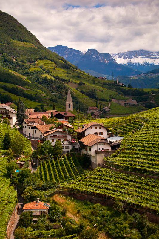 Renon Vineyards (Bolzano), Trentino-Alto Adige, Italy