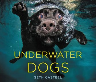 Photographer Seth Casteel's Underwater Dogs Make Waves in a New Book