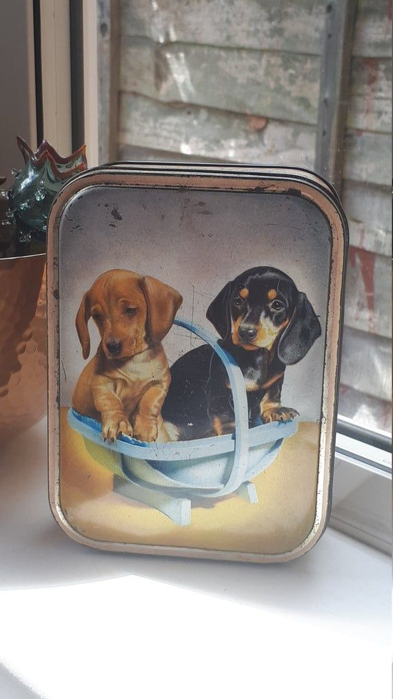 1950 S Toffee Tin Showing 2 Adorable Dachshund Puppies Edward