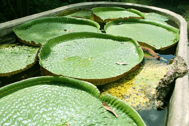 1000 images about plantas acu ticas on pinterest for Plantas de purificacion