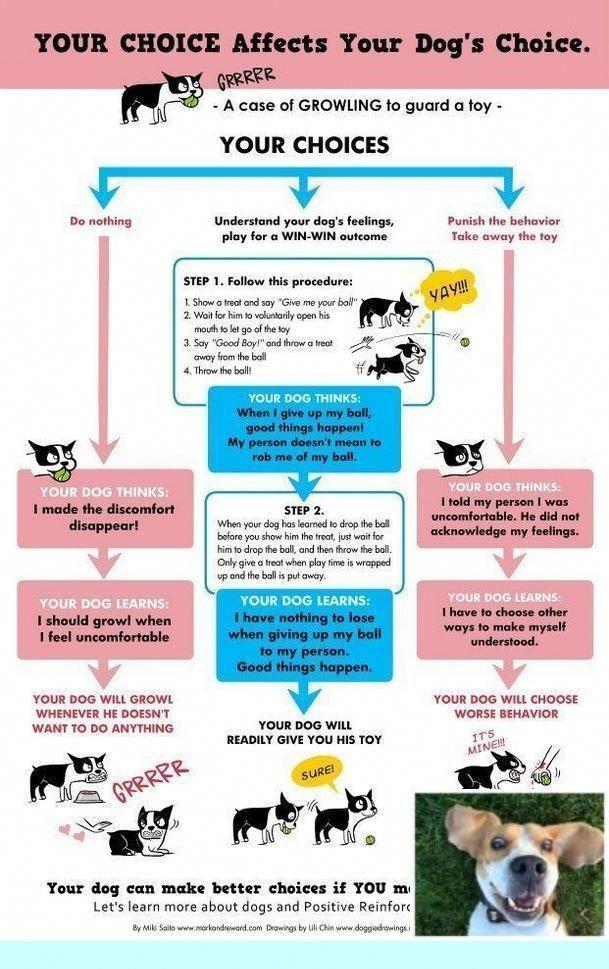 Dog Training Commands Dogtrainingcommands Training Your Puppy