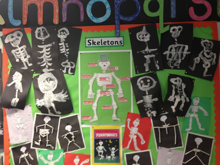 Skeleton display, funny bones book
