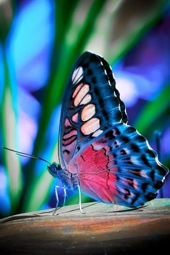 One of the most amazing creatures we see in the garden is the beautiful Butterfly. Graceful and quiet. Gliding from plant to plant, the butterfly is just icing on the[...]