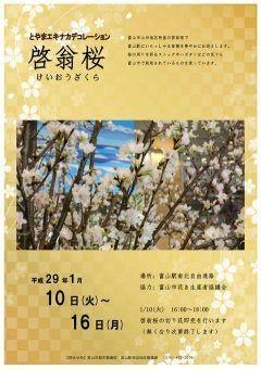 富山駅を訪れた方に季節感を感じていただくとともに富山市特産切花を広く紹介するため富山駅に華やかなアレンジメントが登場します  今まで菊カーネーション七夕クリスマスなど多種多様なデコレーションが行われましたが 今回は啓翁桜がテーマです  是非ご覧ください tags[富山県]