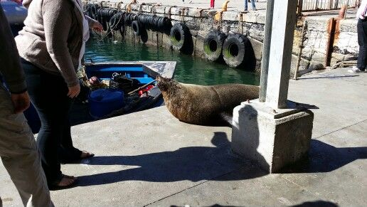 # love Kalk Bay Seals