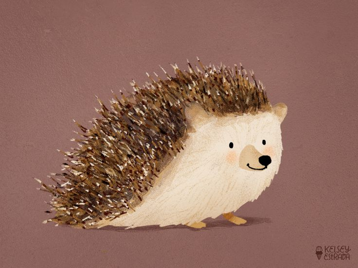 Hedgy cute hedgehog illustration