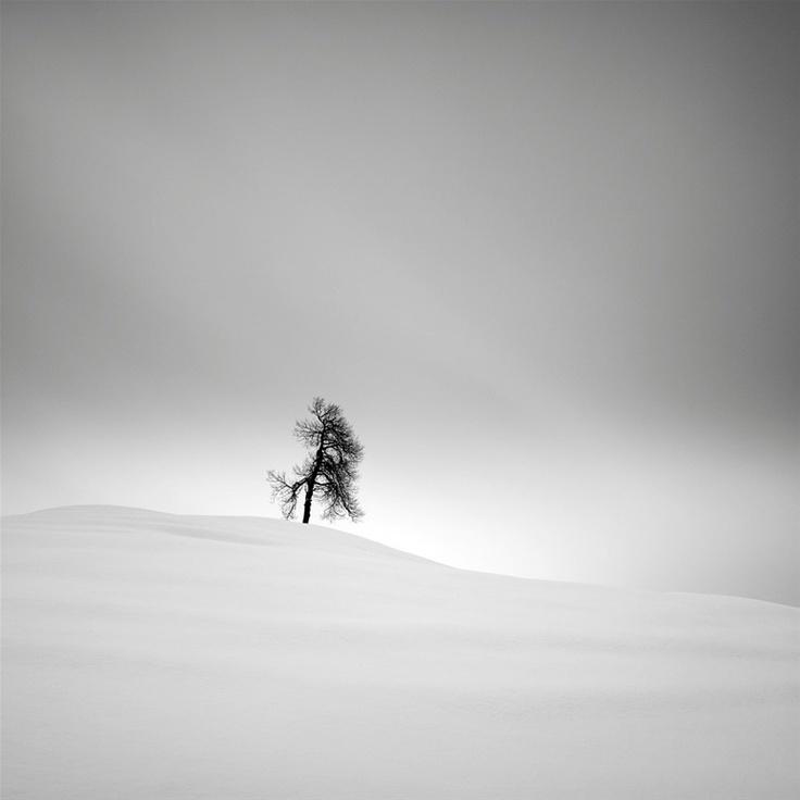 lone tree, by pierre pellegrini