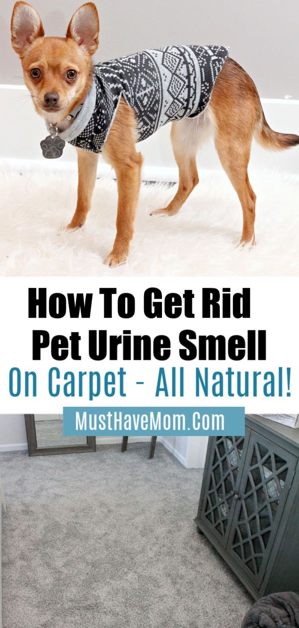 Best Way To Naturally Remove Pet Urine From Carpets