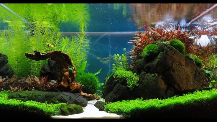 My first #aquascape. Rocks from Eile in Scotland