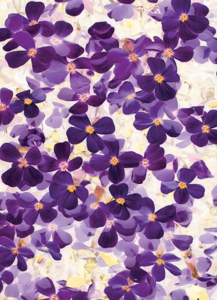 Violet Bloom as Canvas Print by Amy Sia | JUNIQE