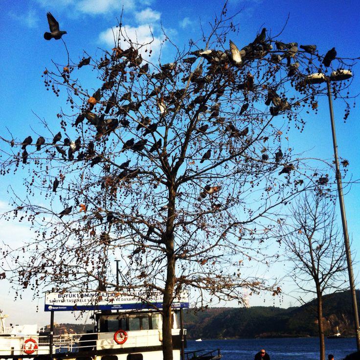 Sarıyer Seaside, Istanbul Turkey
