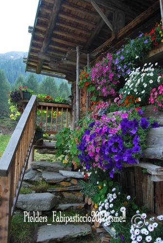 Lazins Hof, Passeiertal  quei fiori sono fantastici