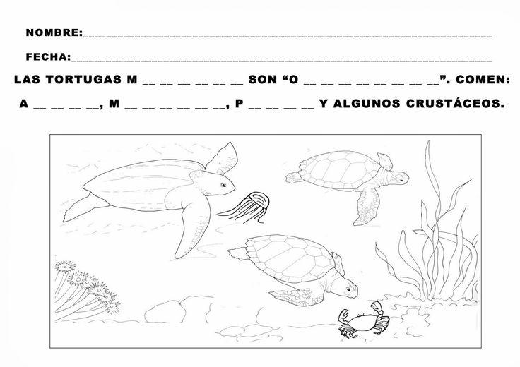 Trabajando con personitas: ¿Qué comen las Tortugas?