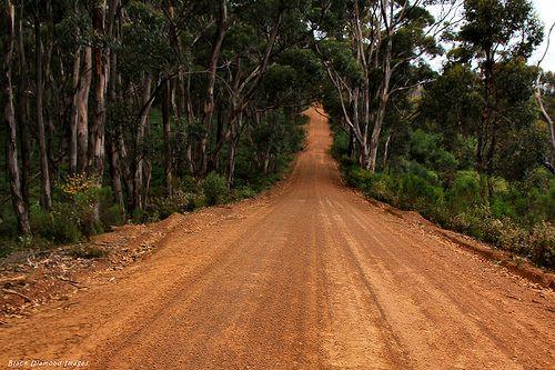 cool Eucalyptus cladocalyx, Sugar Gum, Playford Highway, Flinders Chase National Park, Kangaroo Island, South Australia Check more at http://www.discounthotel-worldwide.com/travel/eucalyptus-cladocalyx-sugar-gum-playford-highway-flinders-chase-national-park-kangaroo-island-south-australia/