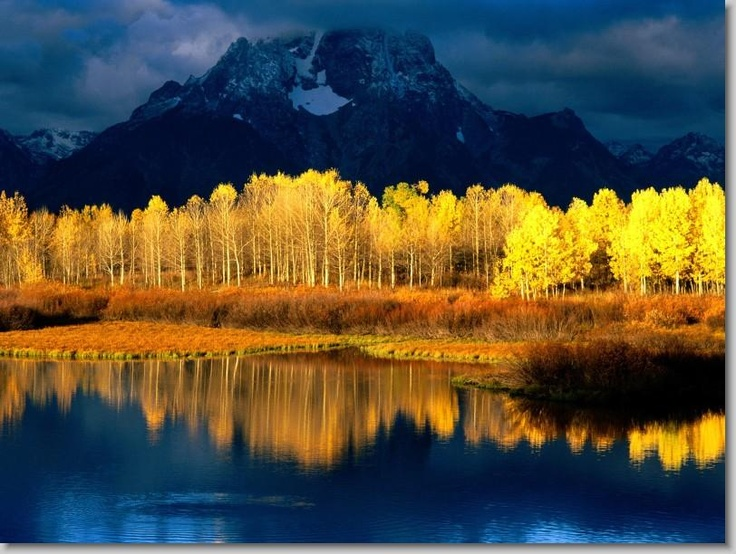 Grand TetonsAspen Trees, Nature, Amazing Pictures, Colors, Beautiful Places, National Parks, Yellow, Theme Photography, Aspen Colorado