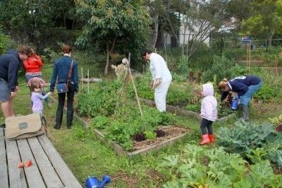 Community Garden Information: How To Start A Community Garden - Community gardens are great for those with little space. Read here for more community garden information and what to plant in a community garden plot. Click this article to learn more.
