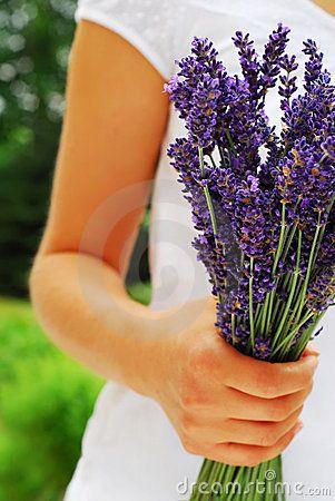 Het boeket van de lavendel
