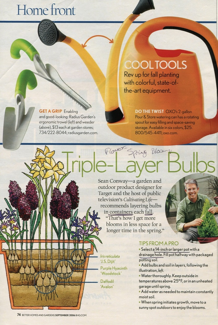 156 best bulbs / geophytes in containers images on pinterest