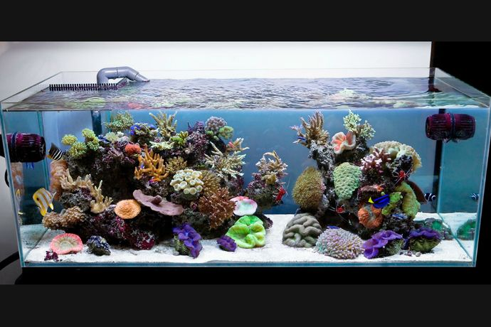 136 best images about reef tanks and setups on pinterest for Marine fish store