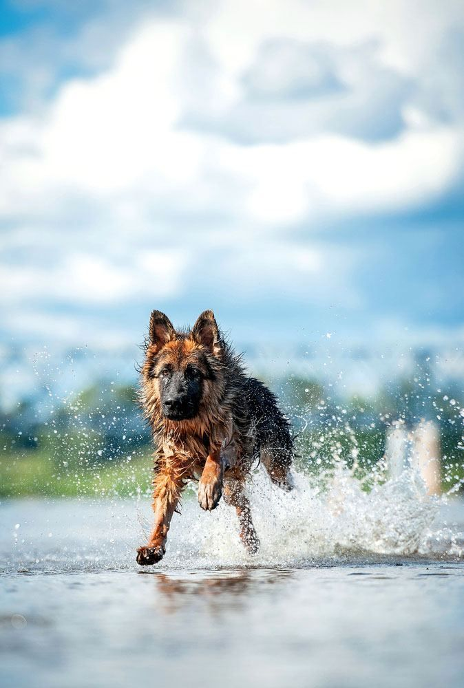 Dog enjoying a summer day in the water. Find German Shepherd names that are perfect for this beautiful breed... http://www.dog-names-and-more.com/German-Shepherd-Names.html