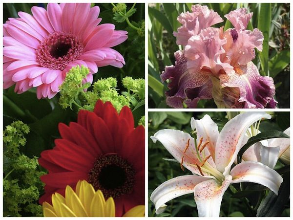 These flowers bloom in the summer. Go local and save money and the environment on your big day.