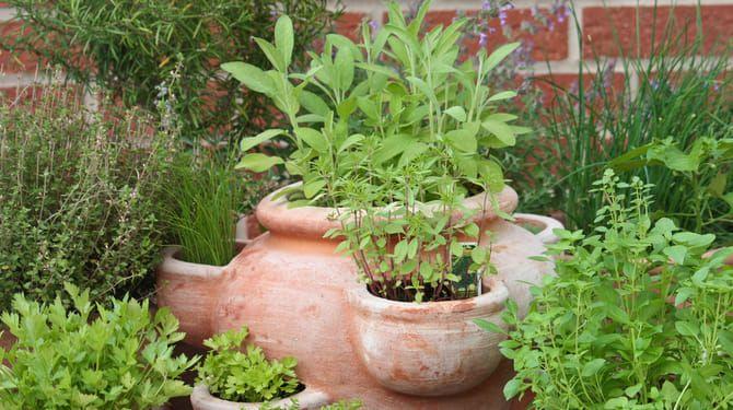 Bylinky pestované v nádobách treba pred mrazmi ochrániť.