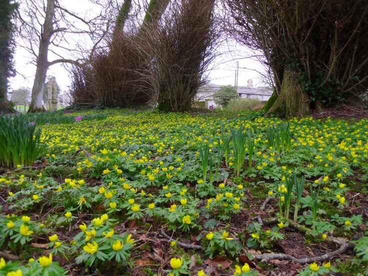 126 best Spring bulb garden images on Pinterest Dutch iris