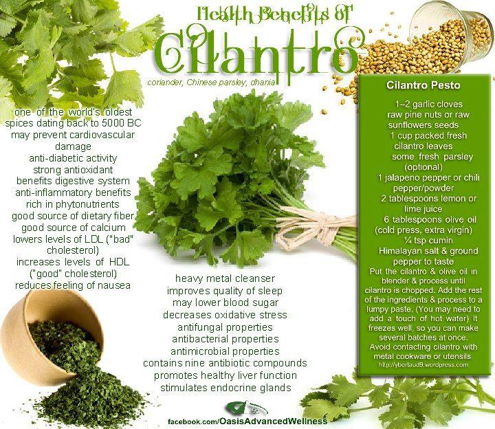 Health Benefits Of Cilantro Like Us At Health