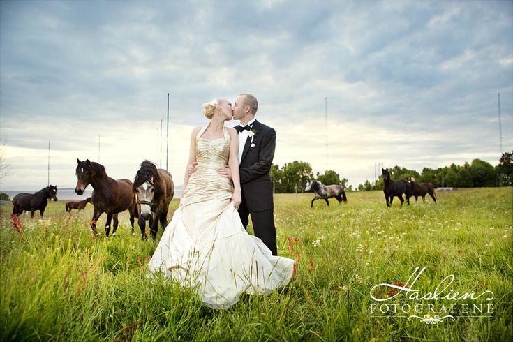 Wedding Photo. Etter avtale med eierne av hestene i hestehagen ved Jeløy Radio i Moss, fikk vi fotografere et brudepar inne i hestehagen. Fotografiene er fra sommeren 2012.