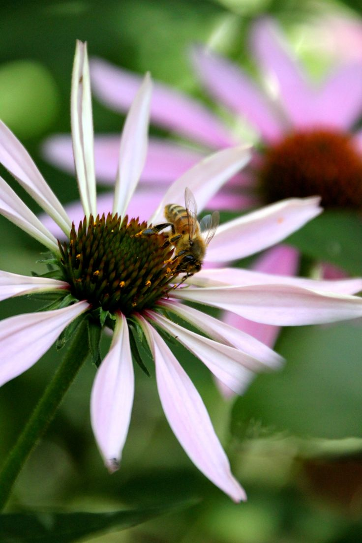 214 best bee well images on pinterest honey bees beekeeping and