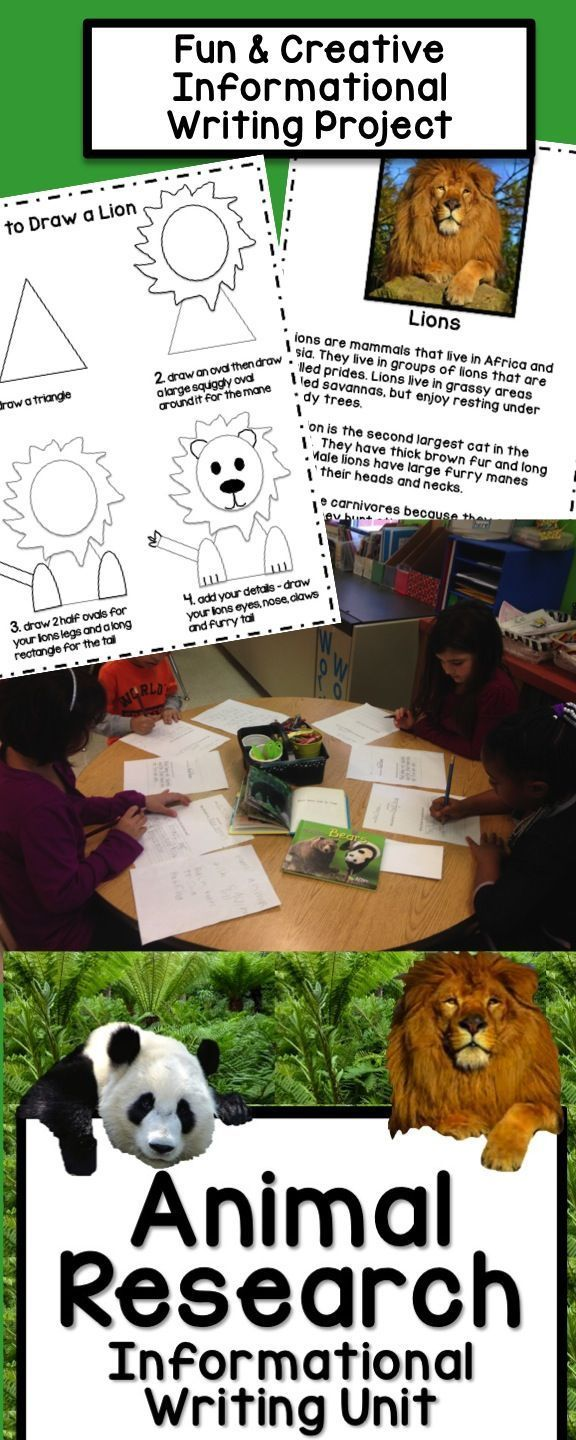 Non Fiction Writing Project Lions, Pandas, Zebras or Alligators Animal Facts Book with How to Draw pages and informational articles for student researching!