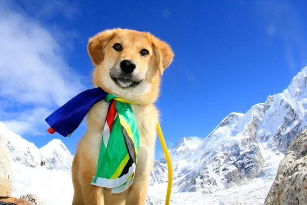 Bizarre News: Meet The 1st Dog To Climb Mount Everest - Michael W Travels...