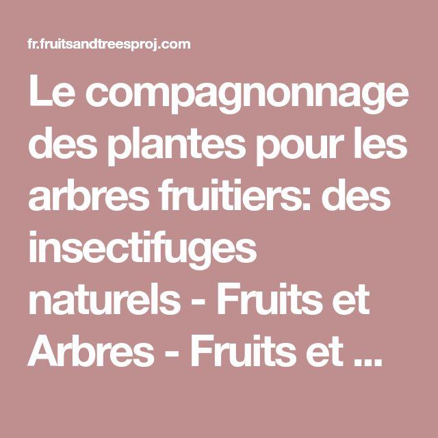 Le compagnonnage des plantes pour les arbres fruitiers: des insectifuges naturels - Fruits et Arbres - Fruits et Arbres