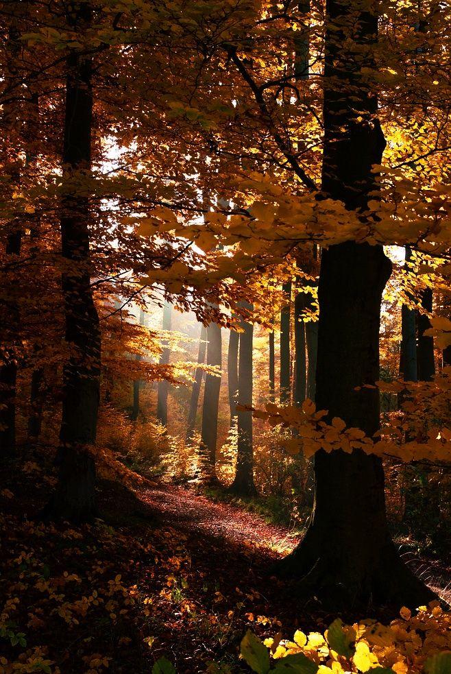 Teutoburger Wald                                                       …