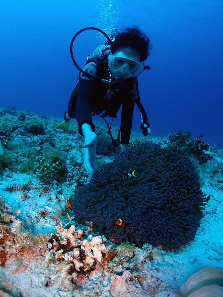 Diving at Zamami island @ Okinawa