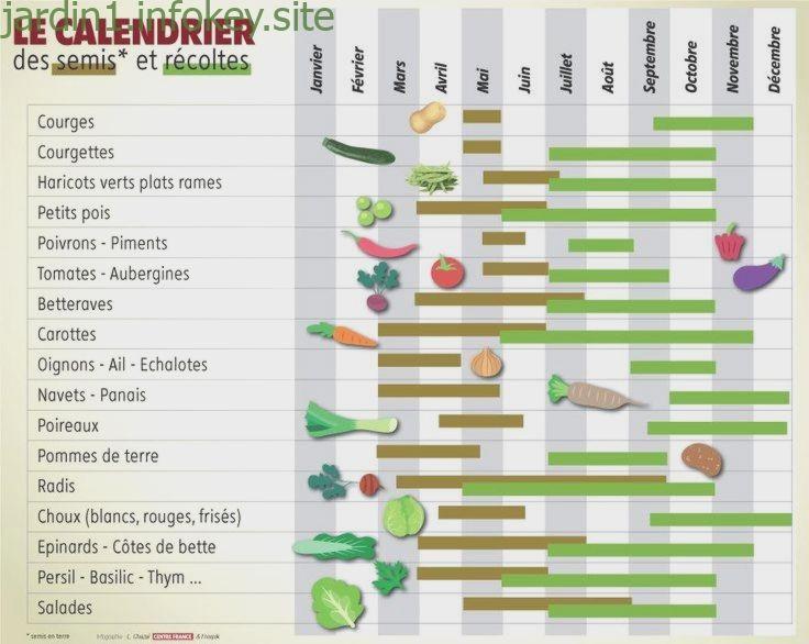 Jardinage Quand Planter Tomates Haricots Ou Radis Dans Son