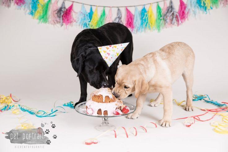 Verjaardag Labrador Juno - 3 jaar - Doggy Cakesmash-15